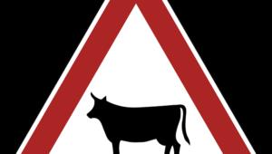 ¿Responabilidad del conductor o del animal?